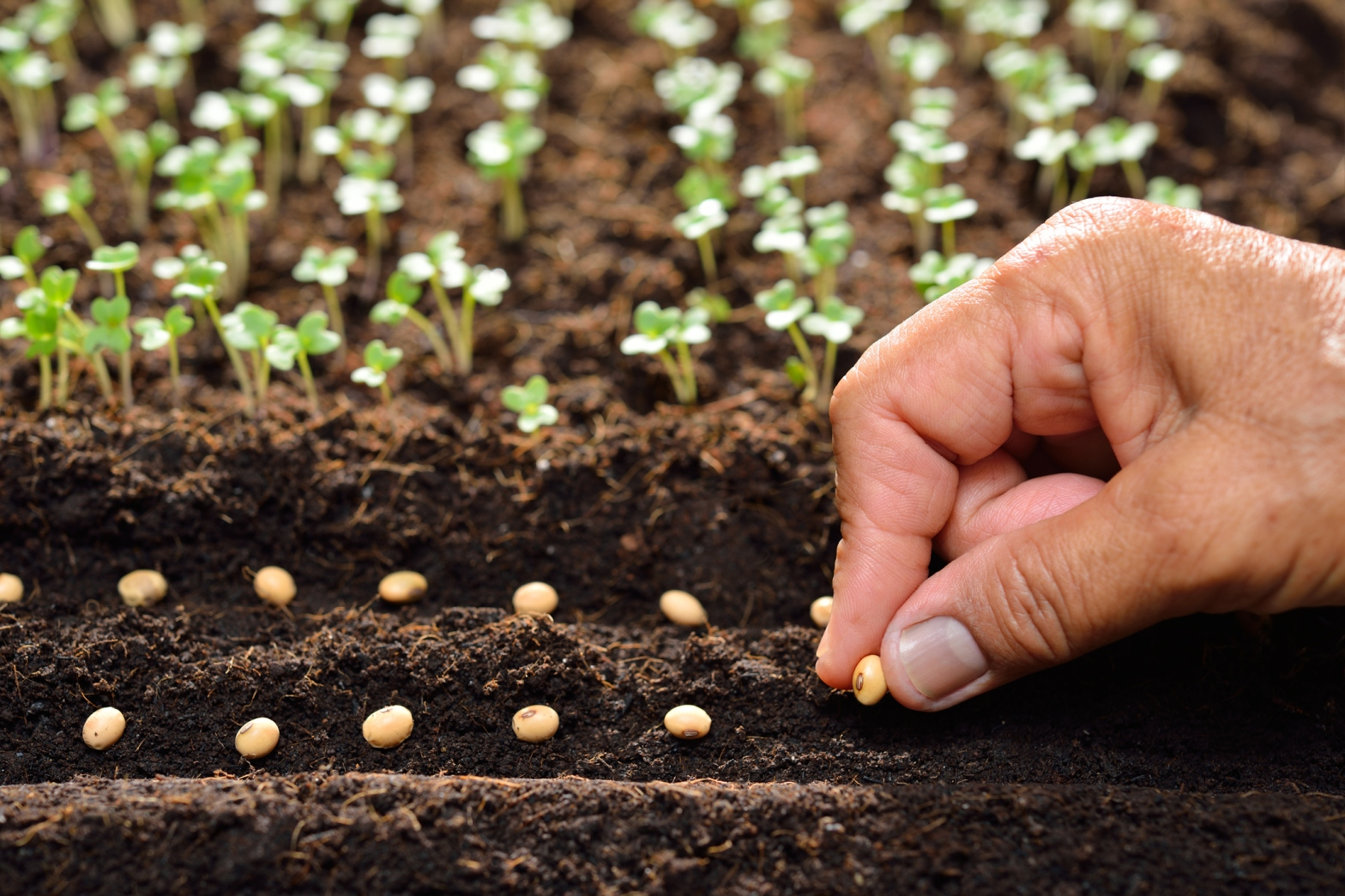 Image of a hand planting seeds
