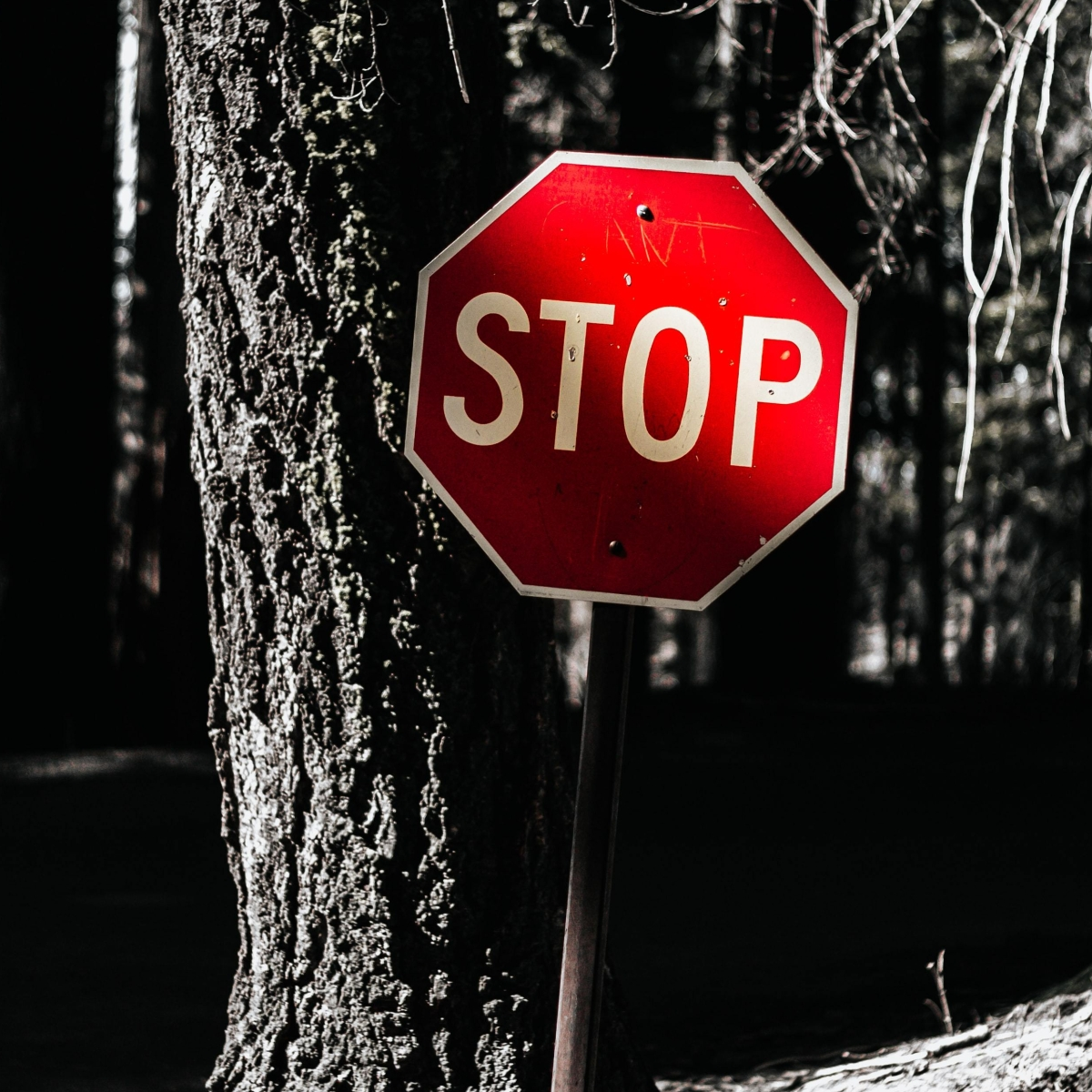 Stop sign in forest